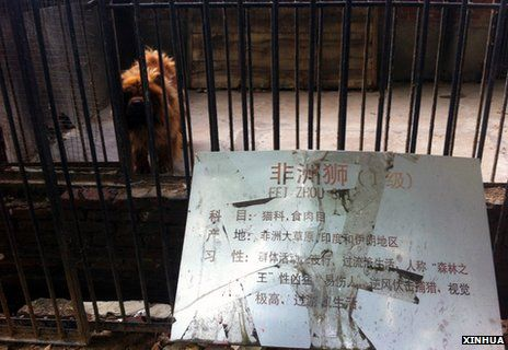 Un zoo fait passer un chien pour un lion et ferme