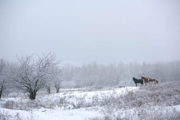 Les chevaux (photo : René Marquis)