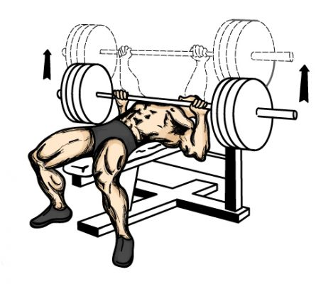 Bench Press (source de l'image : leehayward.com)