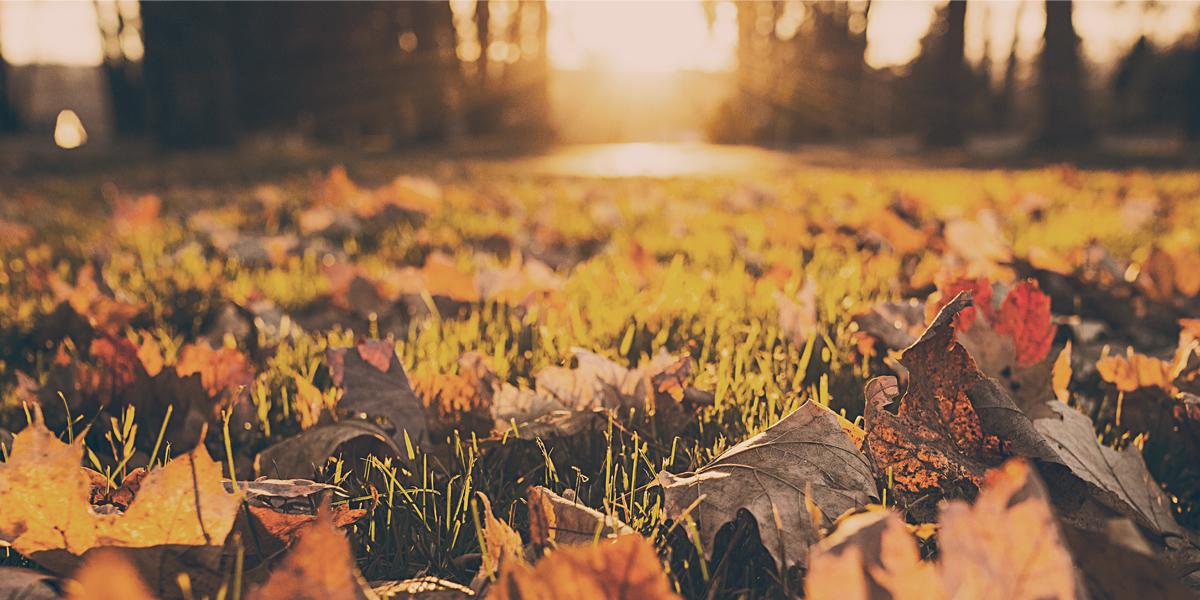 usr_img/2016-09/septembre/semaine4/automne.jpg
