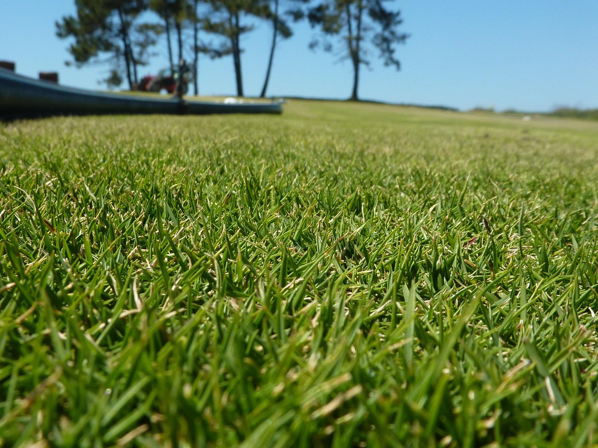 Bien planifier sa tonte de pelouse adg - Quand semer gazon ...
